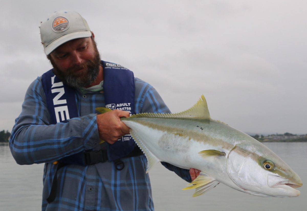 Salt water fly fishing guide. Tauranga, New Zealand