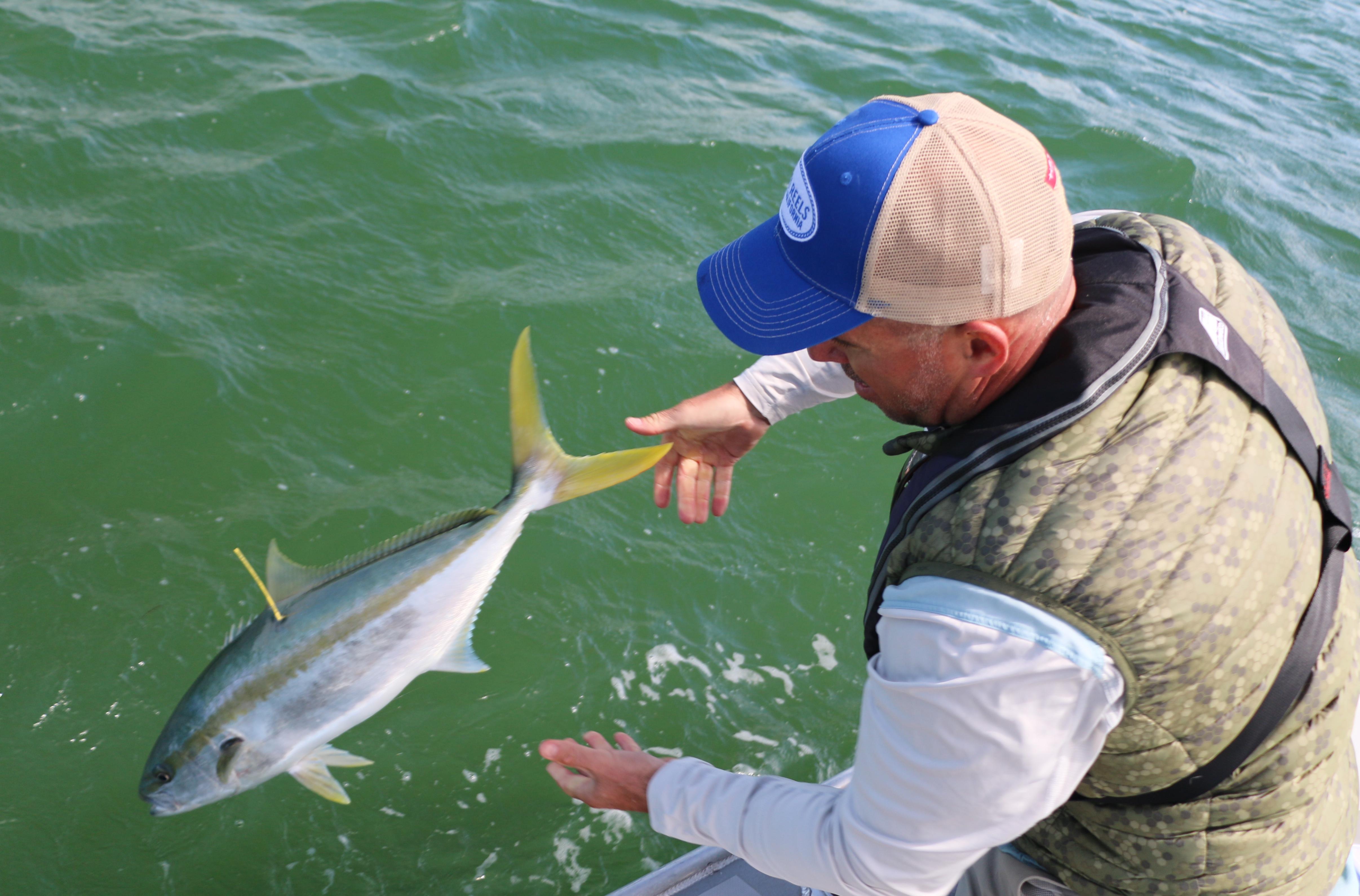 Tag, kingfish, fly rod, salt water, collingwood, manukau, waiheke island