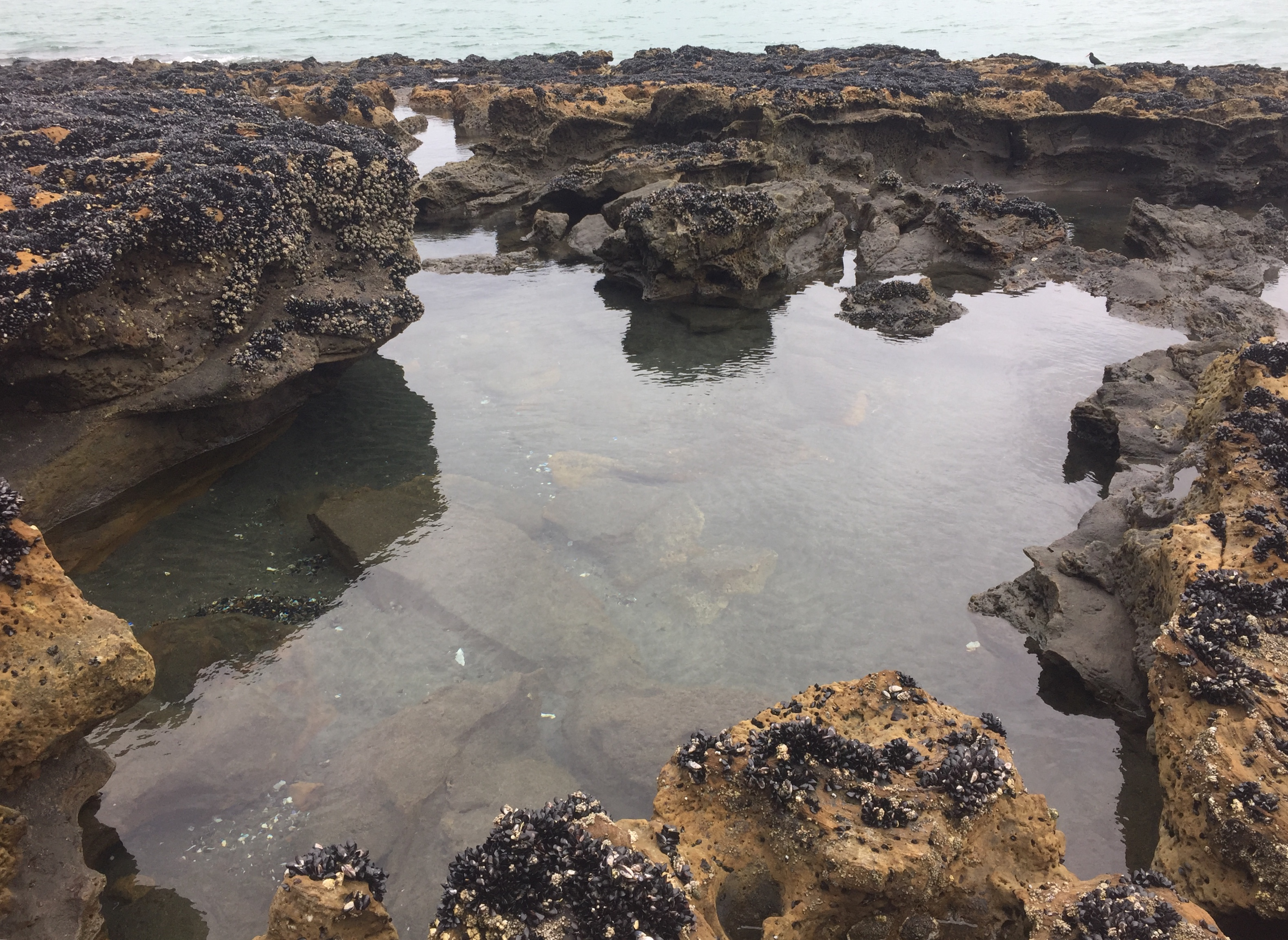 Aotea harbour, new zealand, rock pools, fish