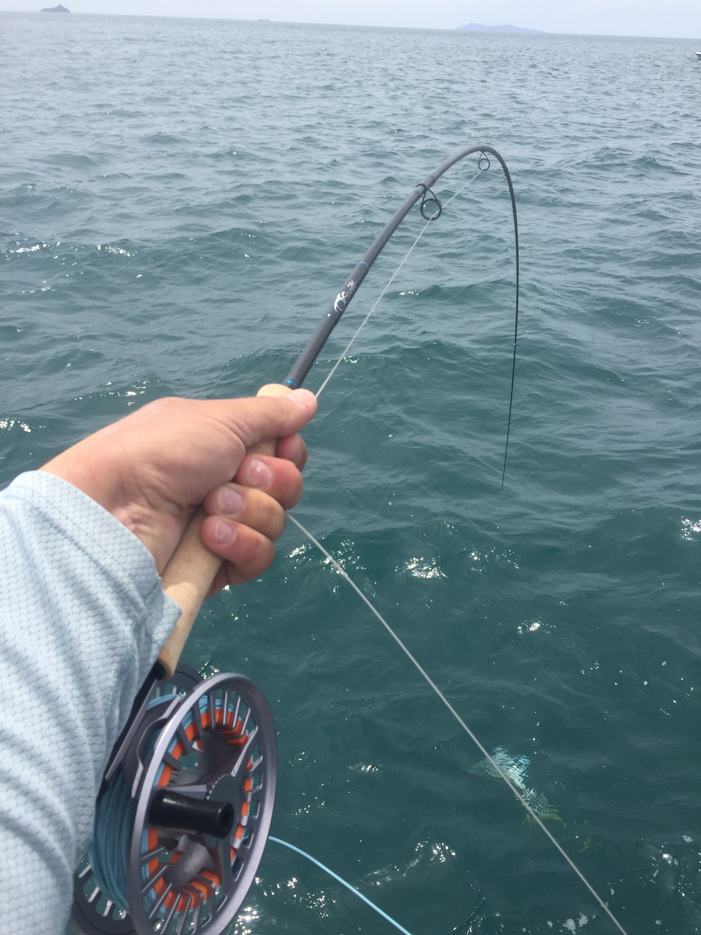 Scott sector, fly rod, fishing, salt water fly, guide, New Zealand, Tauranga, collingwood