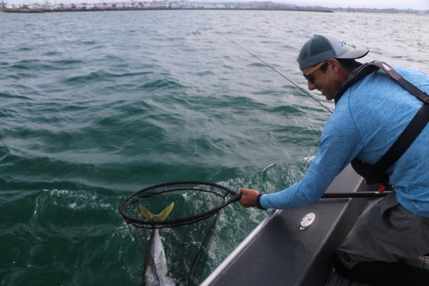 Tauranga harbour, kingfish, fly fishing, salt water, snapper, Kahawai, boat, fishing