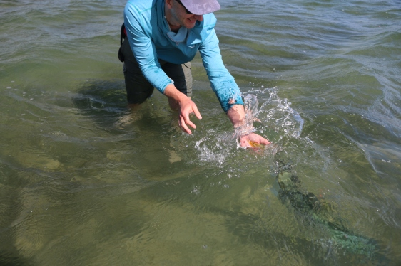 tag and release, kingfish, New Zealand, flats, ray rider, salt fly, fishing, charter,